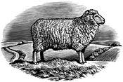sheepdrove-logo