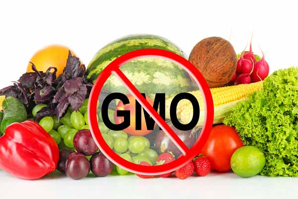 Image result for gmos