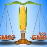 GMO NonGMO_med
