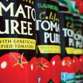 Sainsburys GM tomato paste
