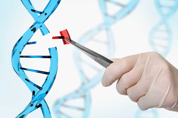 essay on why genetic engineering is wrong Whether williams is right or wrong, one thing is undeniable: despite  forces  fighting genetic modification in europe have rallied support for.